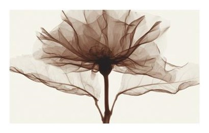 Rose by Steven N. Meyers art print