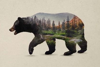 The North American Black Bear by Davies Babies art print