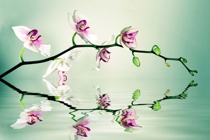 Zen by Lee Sie art print