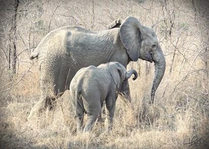 Elephants by Helene Sobol art print