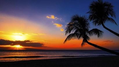 Palm Trees Sunset by Jonathan Ross art print