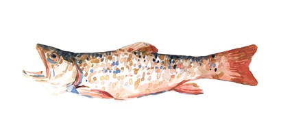 Freckled Trout I by Emma Scarvey art print