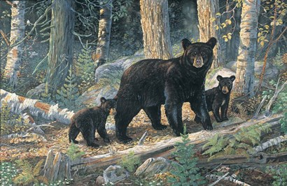 Woodland Lessons by Terry Doughty art print