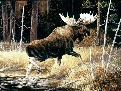 Moose by Terry Doughty art print