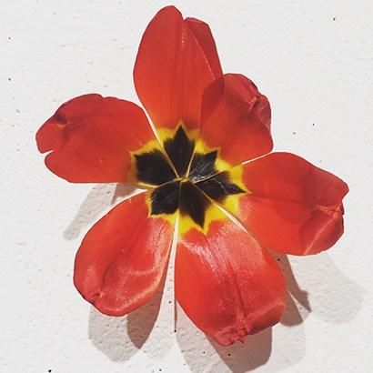 Red by Yellow Café art print