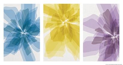 Three X-Ray Flowers by Yellow Café art print