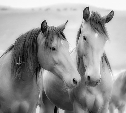 Horse Friends by Yellow Café art print