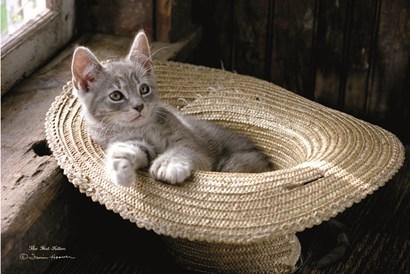 The Hat Kitten by Irvin Hoover art print