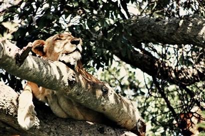 Lion Tree by Susan Bryant art print