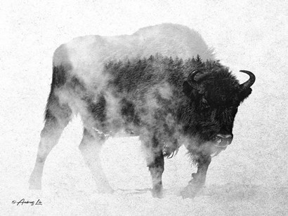 Black & White Buffalo by Andreas Lie art print