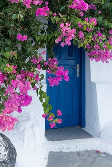 Greece, Santorini A Picturesque Blue Door Is Surrounded By Pink Bougainvillea In Firostefani by Brenda Tharp / DanitaDelimont art print