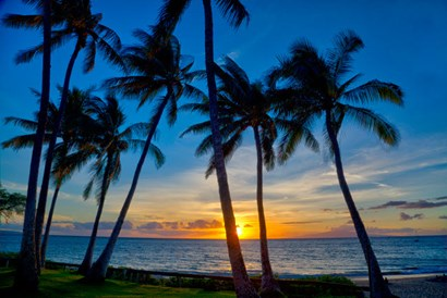 Sunset And Silhouetted Palm Trees, Kihei, Maui, Hawaii by Darrell Gulin / Danita Delimont art print