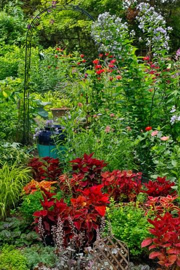 Garden Summer Flowers And Coleus Plants In Bronze And Reds, Sammamish, Washington State by Darrell Gulin / Danita Delimont art print