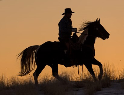 Cowboy Riding His Horse Winters Snow Silhouetted At Sunset by Darrell Gulin / Danita Delimont art print