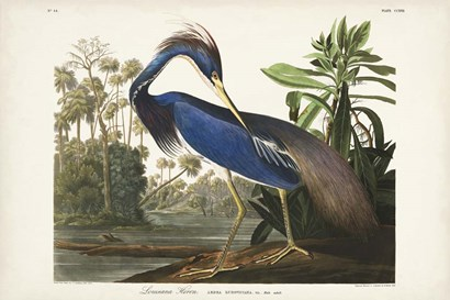 Pl 217 Louisiana Heron by John James Audubon art print