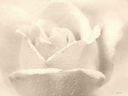 White Rose by Lori Deiter art print