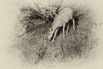 Badlands Antique 7 by Gordon Semmens art print