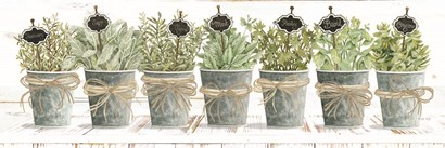 Herbs in a Row by Cindy Jacobs art print