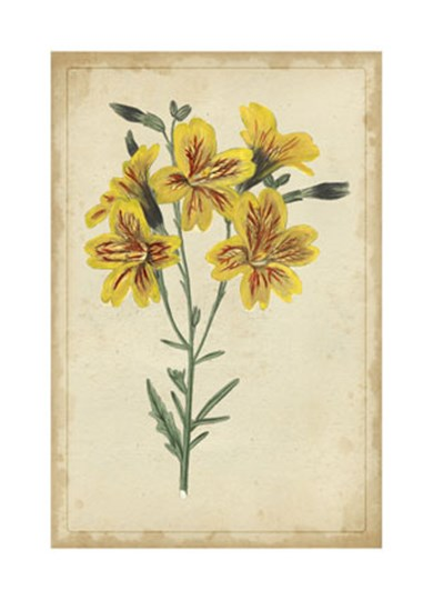 Curtis Blooms in Yellow IV by Edward S. Curtis art print