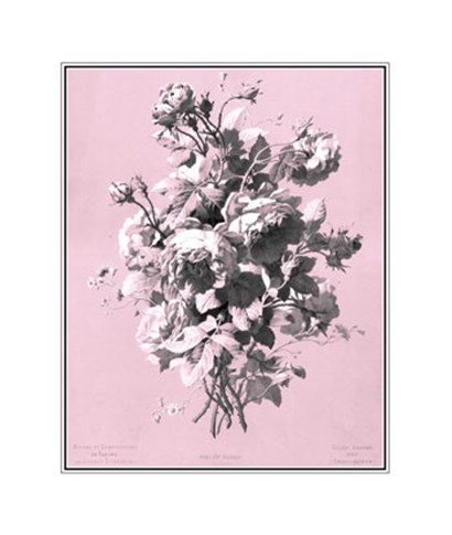 Roses on Pink by Dussurgey art print