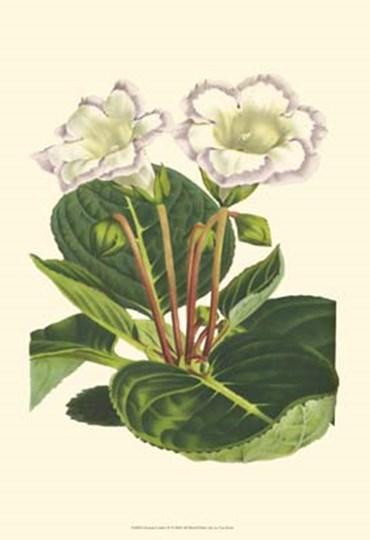 Gloxinia Garden IV by Francois Van Houtte art print
