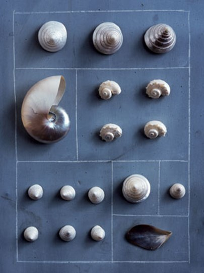 Hopscotch of Shells by Soulayrol csech art print