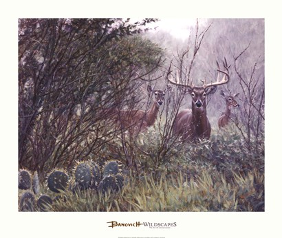 Lone Star Whitetail by John Banovich art print