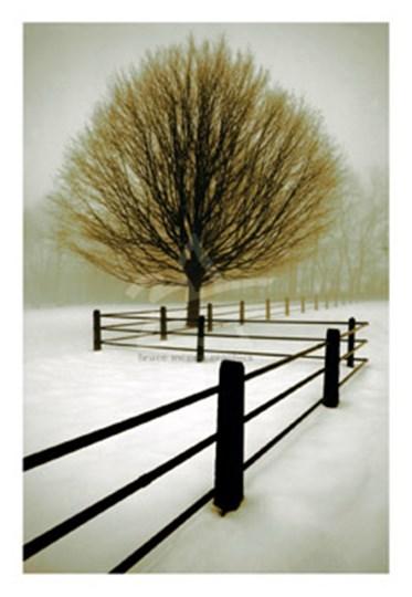 Solitude by David Lorenz Winston art print