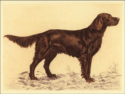 Hunting Dogs-Setter by Andres Collot art print