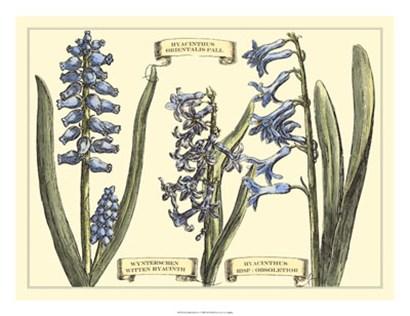 Hyacinth in Bloom by Claude Langlois art print