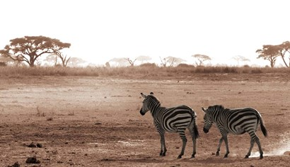 Crossing The African Plains by Jorge Llovet art print