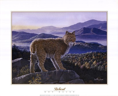 Bobcat by Don Balke art print
