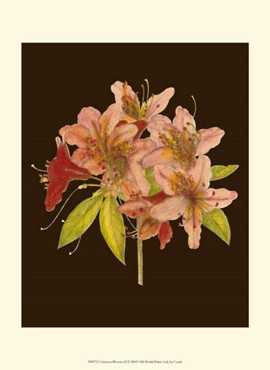 Crimson Blooms II by Edward S. Curtis art print