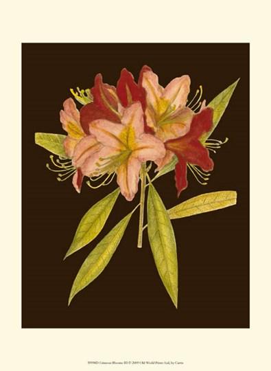 Crimson Blooms III by Edward S. Curtis art print