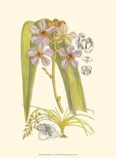 Orchid Plenty V by Edward S. Curtis art print