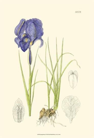 Spring Bounty I by Edward S. Curtis art print