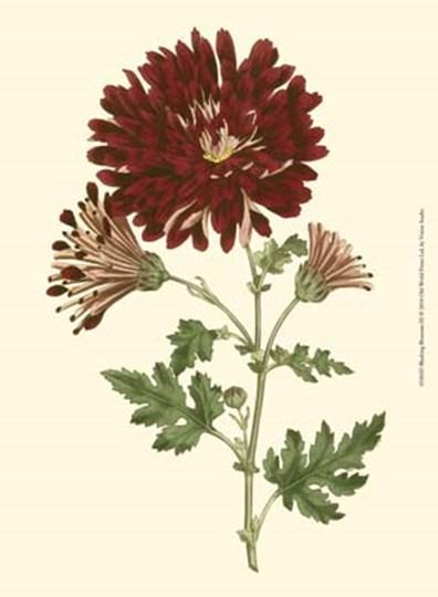 Blushing Blossoms III by Vision Studio art print