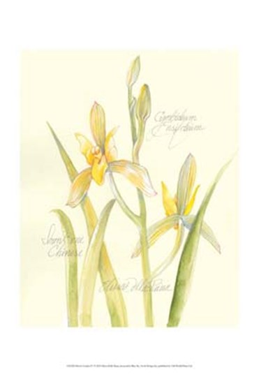 Elissa's Garden IV by Elissa Della-Piana art print
