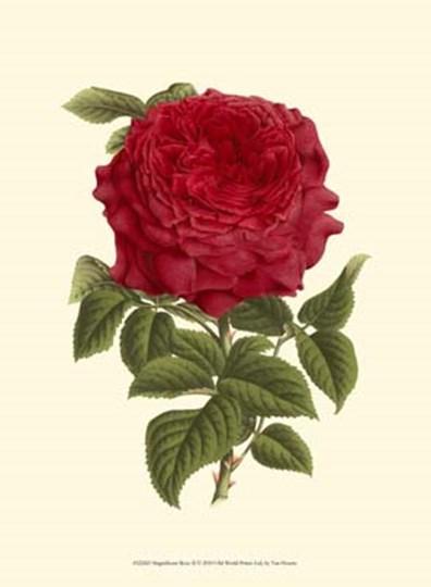 Magnificent Rose II by Francois Van Houtte art print