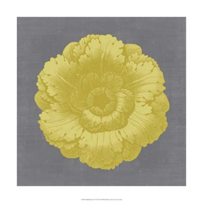 Gilded Rosette VI by Vision Studio art print