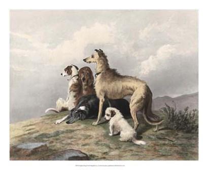 Highland Dogs by Sir Edwin Henry Landseer art print