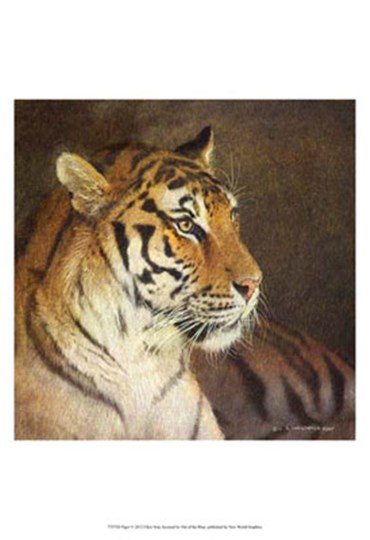 Tiger by Chris Vest art print