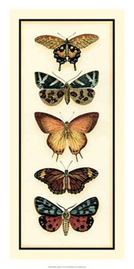 Butterfly Collector V by Chariklia Zarris art print