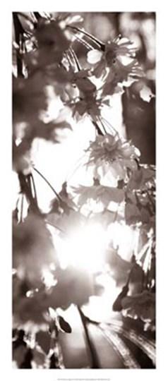 Blossom Triptych I by Renee Stramel art print
