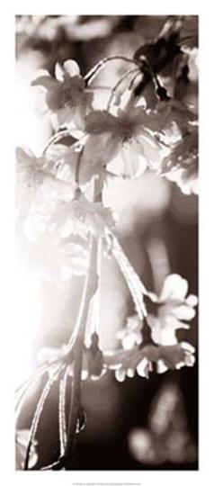 Blossom Triptych III by Renee Stramel art print