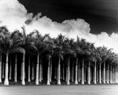 White Palms, Costa Rica by Monte Nagler art print