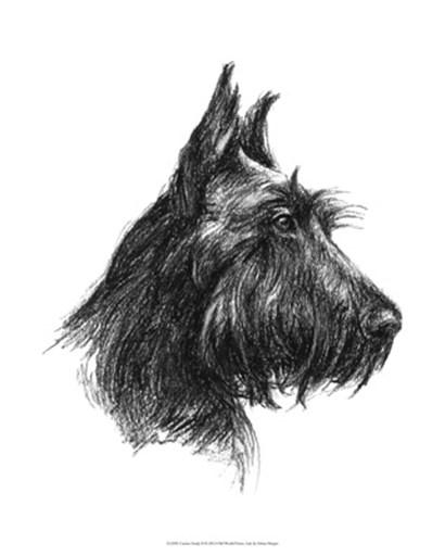 Canine Study II by Ethan Harper art print