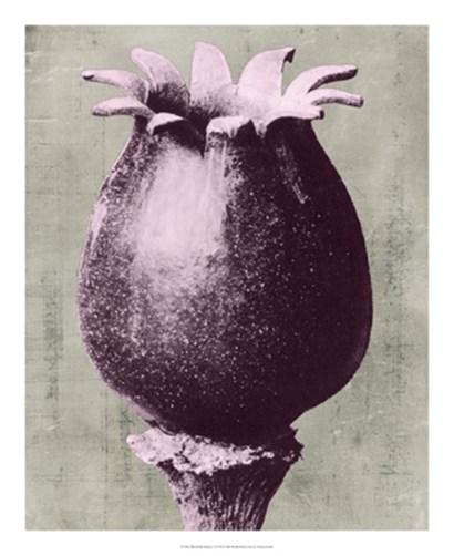 Blossfeldt Redeux I by Vision Studio art print