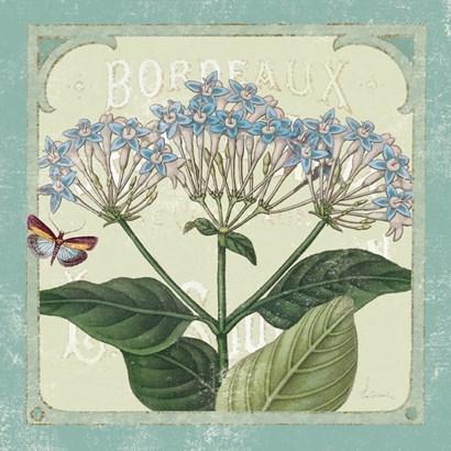 Parisian Flower  I by Sue Schlabach art print