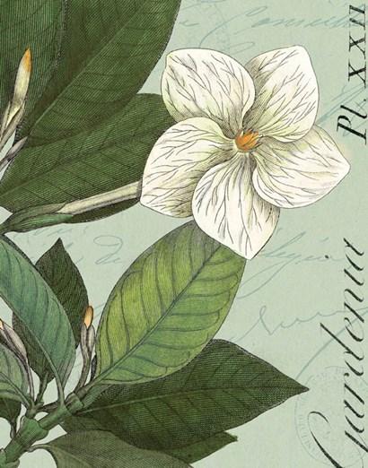 Botanique Bleu III by Wild Apple Portfolio art print